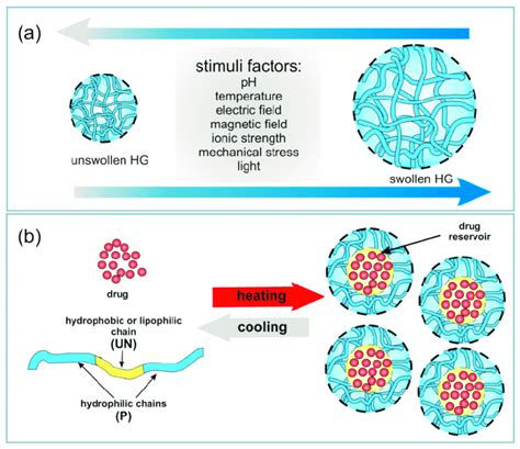 (a) Types of stimuli causing HG swelling. (b) Schematic illustration of...   Download Scientific ...