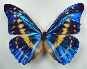 Obraz znaleziony dla: motyle