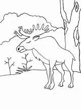 Elk Coloring Ausmalbilder Animals Elch Malvorlagen Ausdrucken Kostenlos Zum sketch template