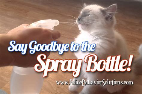 time  stop spraying cats  water feline