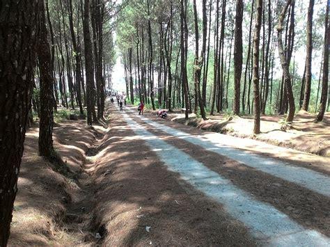 top selfie hutan pinus kragilan tempat selfie populer