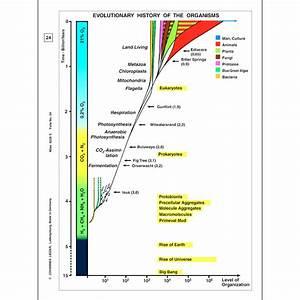 Origin And Evolution Of Life  Part I - English