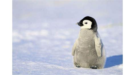 Pittsburgh Penguins Hd Wallpaper Penguin Wallpaper Screensavers 56 Images