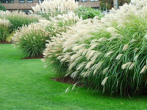 grass for landscaping kew gardens