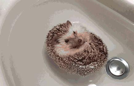 floating hedgehog gif