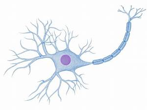 Do You Know All The Organs Of The Nervous System