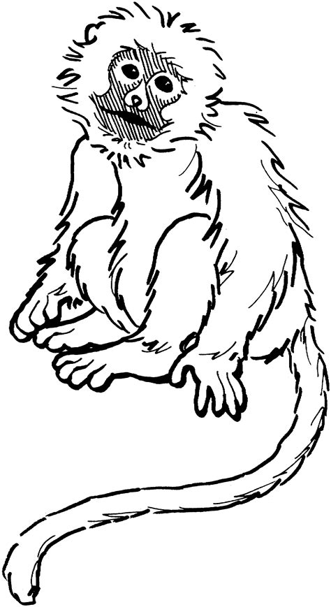 printable monkey coloring pages  kids