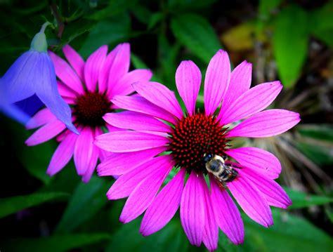 Flowers For Flower Lovers.