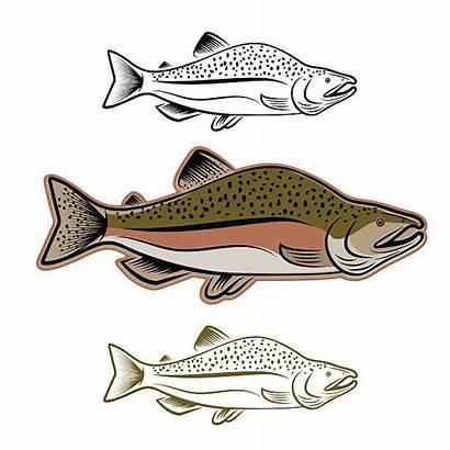 Salmon Fish Sockeye Vector Illustration Clip Illustrations