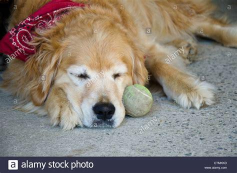 Dog With Bandana Stock Photos And Dog With Bandana Stock