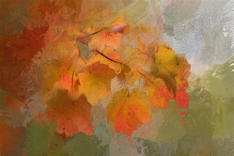 High Resolution Fall Foliage Pictures Free Images Tree Nature Texture Leaf Fall Flower Foliage Red Color Autumn Season