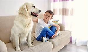 Hundehaare Vom Sofa Entfernen : tierhaare vom sofa entfernen mit diesen 4 effektiven tipps klappt 39 s ~ Bigdaddyawards.com Haus und Dekorationen