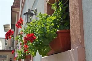 Blumen Für Fensterbank : pflanzen auf fensterbank der mietwohnung entfernung ~ Markanthonyermac.com Haus und Dekorationen
