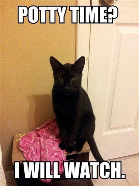 people  love cats  understand