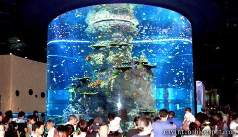 largest aquarium in the world entree kibbles s e a aquarium world s largest aquarium and world s largest viewing panel
