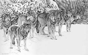 Wolfpack Drawing by Craig Carlson