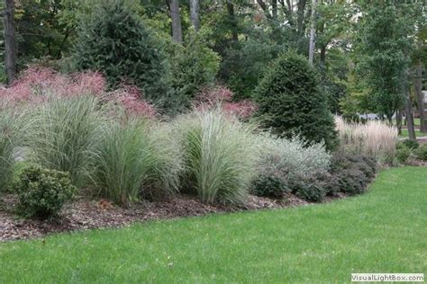 landscaping grasses photos pin by jenny giemza on gardening love pinterest