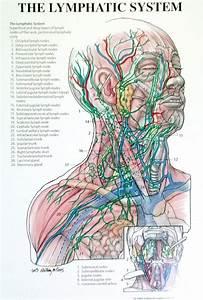 Lymphedema Educational Materials