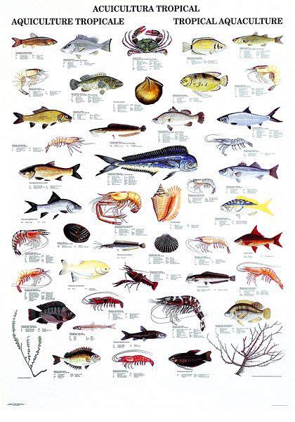 pin  aquarium fish