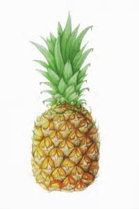 Pineapple Art Drawing