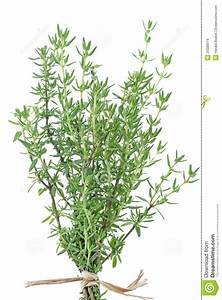 Fresh Thyme Herb Royalty Free Stock Images - Image: 25589519
