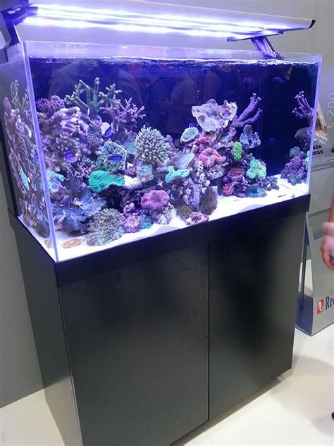 aquarium d eau de mer sea