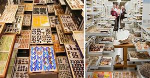 Explore the vast scientific collections of dcs national for Scientific collections of the national museum of natural history