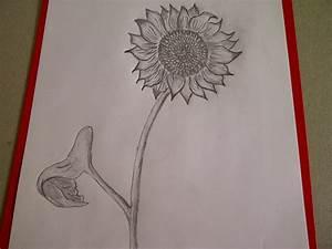 Zeichnungen Mit Bleistift Für Anfänger : sonnenblume zeichnen blume zeichnen zeichnen lernen f r anf nger youtube ~ Frokenaadalensverden.com Haus und Dekorationen