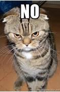 No - angry cat 2   Mem...