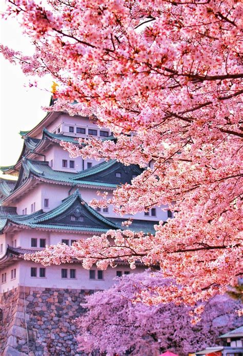 pin by trang on japan landscape cherry blossom