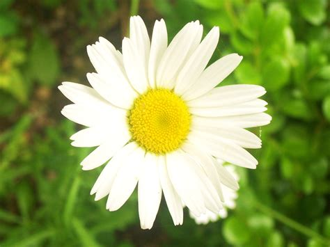 pictures of a flower flower