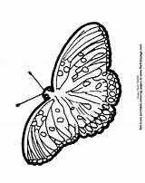 Coloring Colouring Moth Sheets Printable sketch template