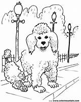 Poodle Coloring French Pages Dog Line Drawing Sheet Pretty Template Dogs Getdrawings Drawings Sketch Skirt Paintingvalley sketch template
