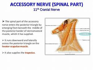 Posterior auricular nerve block - Buyproxy
