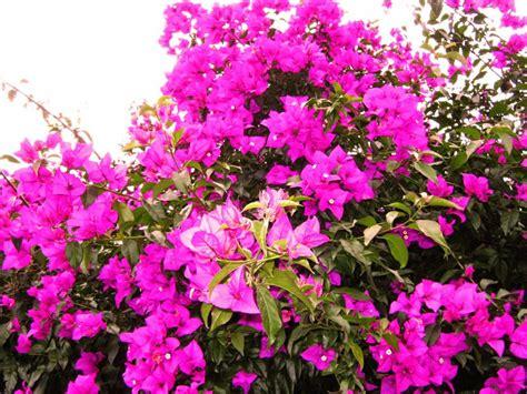 tanaman hias bunga  daerah tropis taman inspirasi safa