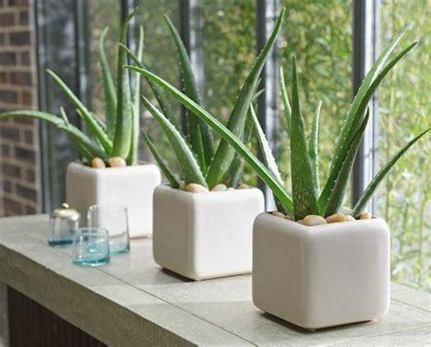 meuble pour plantes d intérieur les 25 meilleures id 233 es de la cat 233 gorie jardins zen sur design de jardin zen jardin