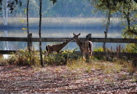 ochlockonee state river park parks florida
