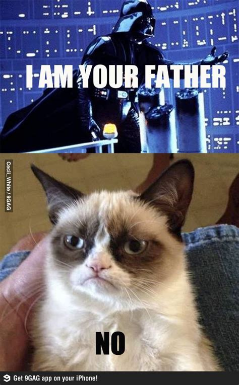 225 Best Images About Cats And Star Wars On Pinterest Cats