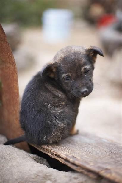 Puppy Dog Sad Dogs Puppies Milk Abandoned
