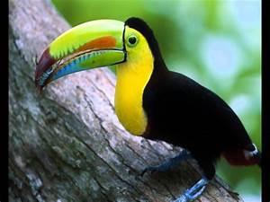 Tropical Birds – WeNeedFun