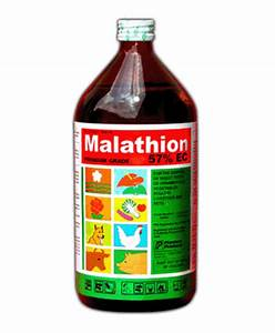Malathion - patient information, description, dosage and directions. Malathion Skin Lotion