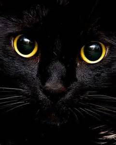 Black Cat with Gold Eyes