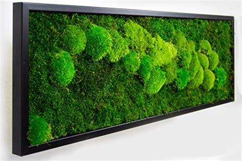 Moosbilder Für Die Wand by Moosbilder Wandgestaltung Bild Mit Moos Und Bilderrahmen