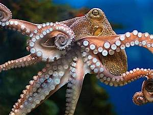 Russia, Now, Making, War, With, Octopus, Will, Compete, With, American, Killer, Dolphin, At, Sea, U2022, The