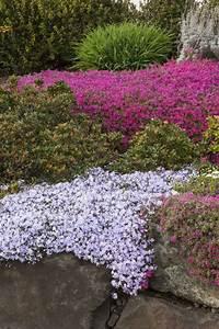Steinbeet Pflanzen Winterhart : steingartenpflanzen unsere 6 favoriten machen die ~ Watch28wear.com Haus und Dekorationen