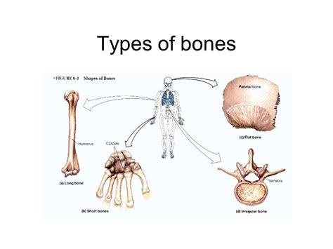 Bone Fun Facts 203/206 Bones In Body- How You Count Tail