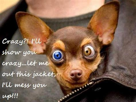 funny dogs  words
