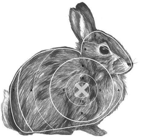 bunny archery  theme    animal targets