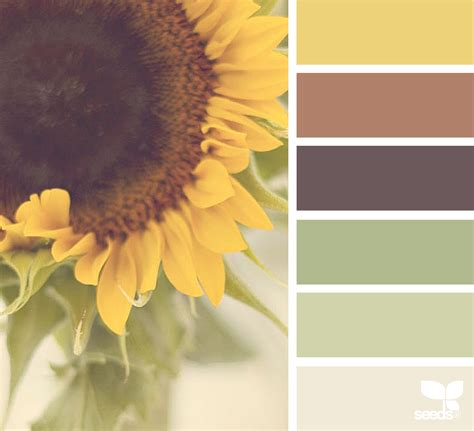 color seeds color nature design seeds