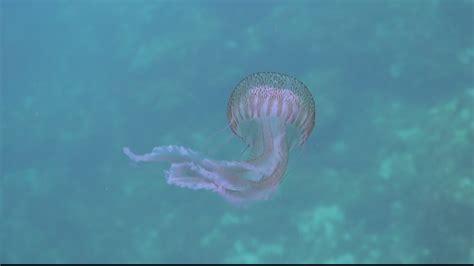 El calor trae más medusas a Calblanque y Cabo de Palos | 7TV